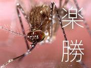 蚊に刺されてもカユくない!