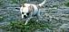久留米犬猫迷子捜索 譲渡情報