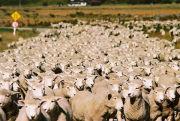 羊 友の会