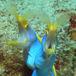 慶良間潜水隊