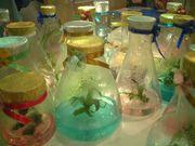 生物多様性条約