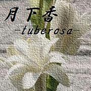 月下香 -tuberosa-