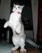 サバ猫大好き^^