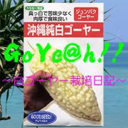 白いゴーヤー栽培日記-GoYe@h!!-