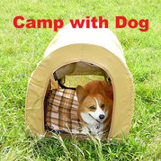Camp with Dog
