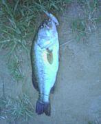 稲荷川釣り!