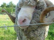 羊の会 〜since2005〜