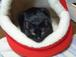 ●黒猫の会●