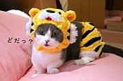 猫叉Masterってヤバい☆