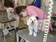 神戸愛犬美容専門学院