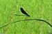 里山と生物多様性