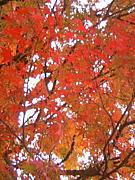京都が好きっw