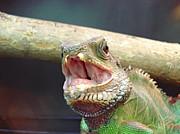 エキゾチックアニマル蜥蜴団