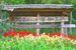 自然と活気にあふれる町 石倉
