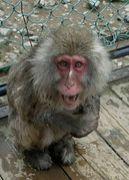 …確かに、落ちつきのない猿か