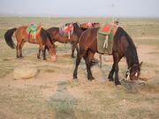 奔流蒙古騎馬隊07第4陣