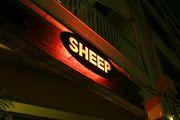 SHEEP in TACHIKAWA