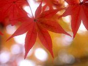 ◆京都のフリマ◆