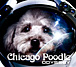 Chicago Poodle For GAY