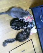 千葉県猫の会