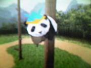 パンダさん日記