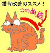 猫背改善のススメ!