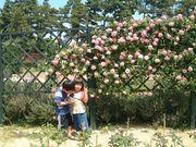 つるバラのある風景