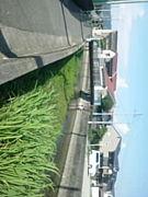 姫路サイクリング