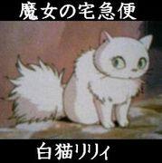 ☆白猫リリィ☆