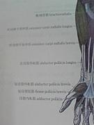 西日本柔整専門学校1年