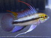 熱帯魚をこよなく愛する沖縄人