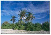 無人島に住んでみたい!!