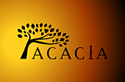 ACACIA (アケイシャ)