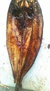 魚栗鼠 ギョリス