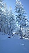 *基礎スキー部スノードロロン*