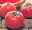 トマト(蕃茄)を愛する会