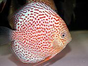 楽しい熱帯魚(ヘルプ)