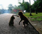 生きる権利~ANIMAL RIGHTS~