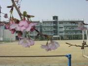 ☆高崎市立片岡中学校☆