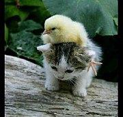 猫同盟!!!!!