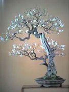「梅盆栽」