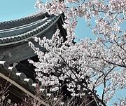 中高年のための京都