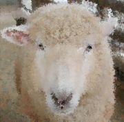 羊の手編み。