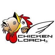 Chicken loach