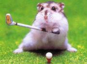 ショートコースで気軽にゴルフ