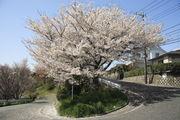 東京大学聖蹟桜ヶ丘パート