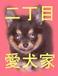 新宿二丁目愛犬家協会