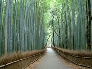 京都の街が大好きなんだよ〜!