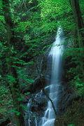 森の叫び〜水と廃棄物の祭り〜