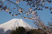家から富士山が見える